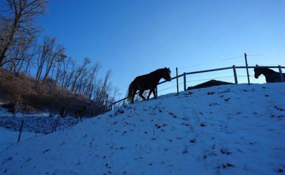 Ponyschule AMIGOS